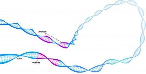 随机snp在全基因组关联研究人群分层分析中的应用