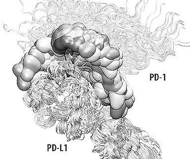 29日报道称,目前最大的蛋白质—蛋白质相互作用网络数据库建成上线