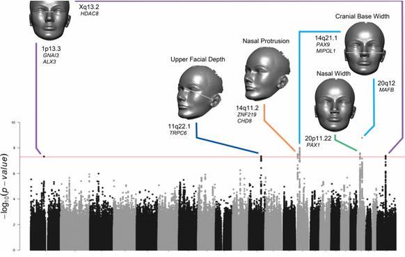 百万单碱基差异的3d影像进行了分析(单核苷酸多态性)